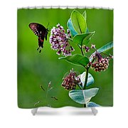 Spicebush Swallowtail  Shower Curtain