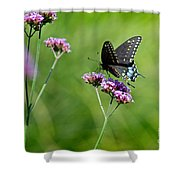 Spicebush Swallowtail Butterfly In Garden Shower Curtain