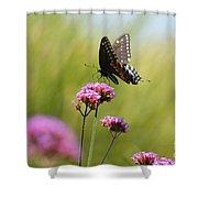 Spicebush Swallowtail Butterfly In Meadow Shower Curtain