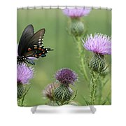 Spicebush Swallowtail Butterfly On Bull Thistle Wildflowers Shower Curtain