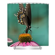 Spicebush Swallowtail Butterfly - Papilio Troilus Shower Curtain