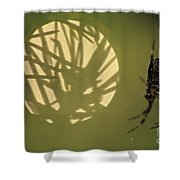 Spider And Sunlight Shower Curtain