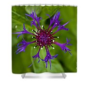 Spider Burst Shower Curtain