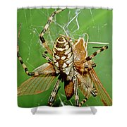 Spider Eating Moth Shower Curtain