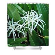 Spider Flower In Sint Maarten Shower Curtain