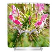 Spider Flower Shower Curtain