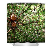 Spider In Its Web Shower Curtain