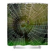 Spider In Web 3 Shower Curtain