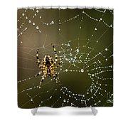Spider In Web 5 Shower Curtain