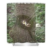 Spider Light Shower Curtain