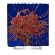 Spider Lily #1 Shower Curtain