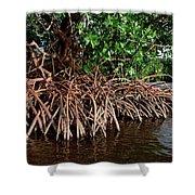 Spider Mangroves Oro Bay Shower Curtain