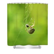 Spider Wrapping Its Food Shower Curtain