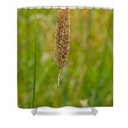 Spider's Grass Staircase Shower Curtain