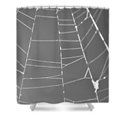 Spiderweb Bw Shower Curtain