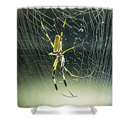 Spidey Busy At Work Shower Curtain
