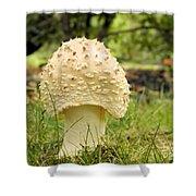 Spiked Mushrooms Shower Curtain