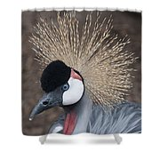 Spikey Feathers-closeup Shower Curtain