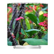 Spiky Flowers Shower Curtain