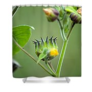 Spiky Green Wild Flowers Shower Curtain