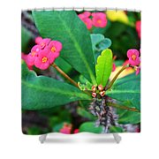 Spiky Pink Flowers Shower Curtain
