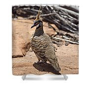 Spinifex Pigeon V3 Shower Curtain