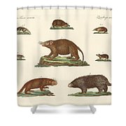 Spiny Animals Shower Curtain