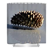Spiny Reflections Shower Curtain