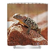 Spiny Swift Looks Over Its Domain Shower Curtain