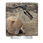 Spiral Horned Antelope Shower Curtain