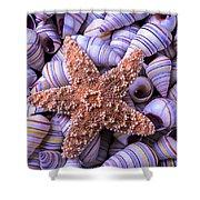 Spiral Shells And Starfish Shower Curtain