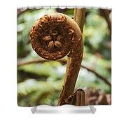 Spiral Tree Fern Shower Curtain