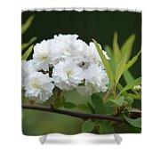 Spirea Blossom Shower Curtain