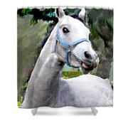 Spirited Grey Horse Shower Curtain