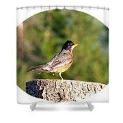 Spirited Robin Shower Curtain