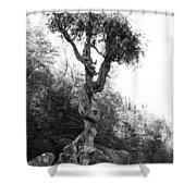 Spirt Tree Shower Curtain