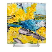 Spix's Macaw - A Dream Of Home Shower Curtain