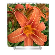Splendid Day Lily Shower Curtain