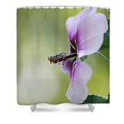 Splendor Shower Curtain