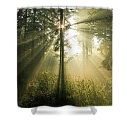 Splendour Shower Curtain