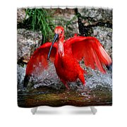Splish Splash - Red Ibis Shower Curtain
