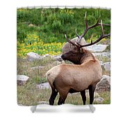 Spoiling For A Fight Shower Curtain