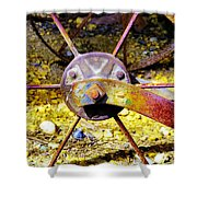 Spokes Ane Rust Shower Curtain
