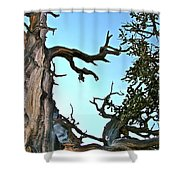 Spooky Bristlecone Pine At Spectra Point On Ramparts Trail In Cedar Breaks National Monument-utah  Shower Curtain