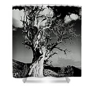 Spooky Tree Shower Curtain
