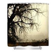 Spooky Tree Shower Curtain