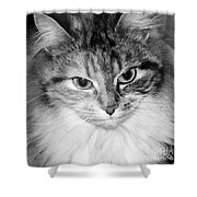 Spooleete. Cat Portrait In Black And White. Shower Curtain