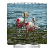 Spoonbills At The Shore Shower Curtain