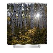 Spot Of Sun Shower Curtain by Jeff Kolker
