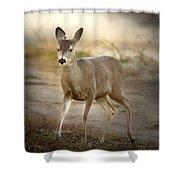 Spotlighted Mule Deer Shower Curtain